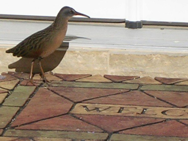 Kansas Bird Photo Gallery